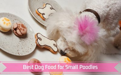 Best Dog Food for Small Poodles