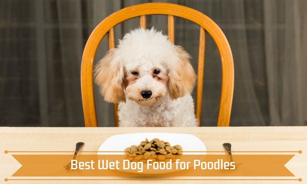 Best Wet Dog Food for Poodles