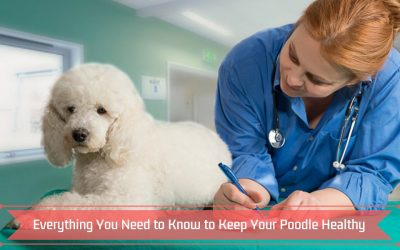 Everything You Need to Know to Keep Your Poodle Healthy