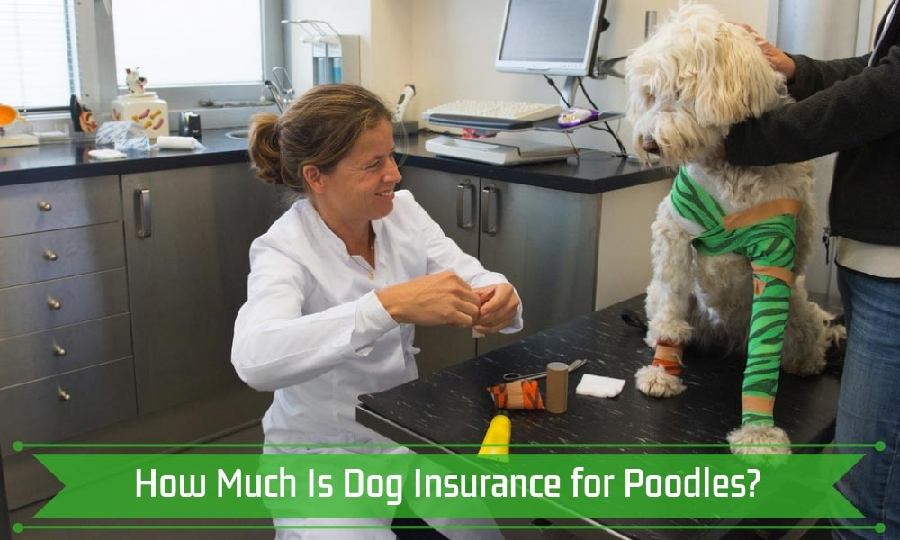 How Much Is Dog Insurance for Poodles