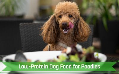 Low-Protein Dog Food for Poodles