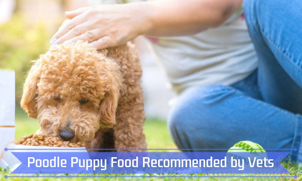 Poodle Puppy Food Recommended by Vets
