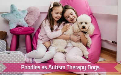Poodles as Autism Therapy Dogs