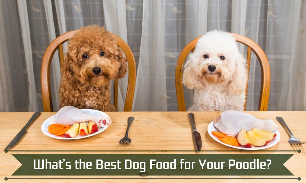 What's the Best Dog Food for Your Poodle