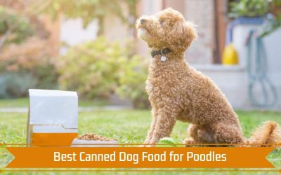 Best Canned Dog Food for Poodles