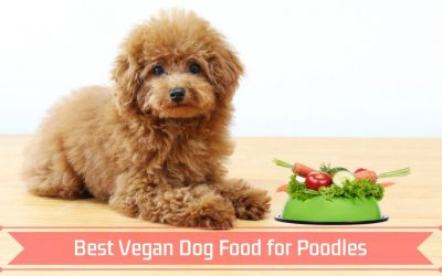 Best Vegan Dog Food for Poodles