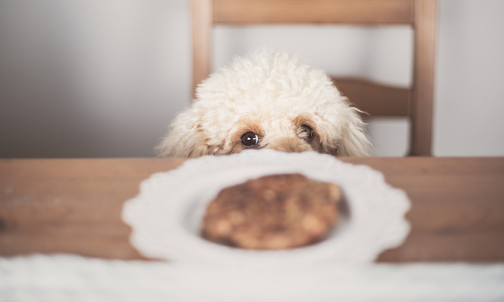 Top Dog Foods for Small Poodles