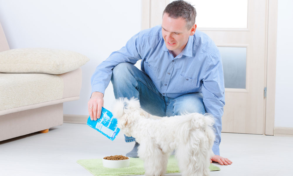 Dog Foods for Your Poodle