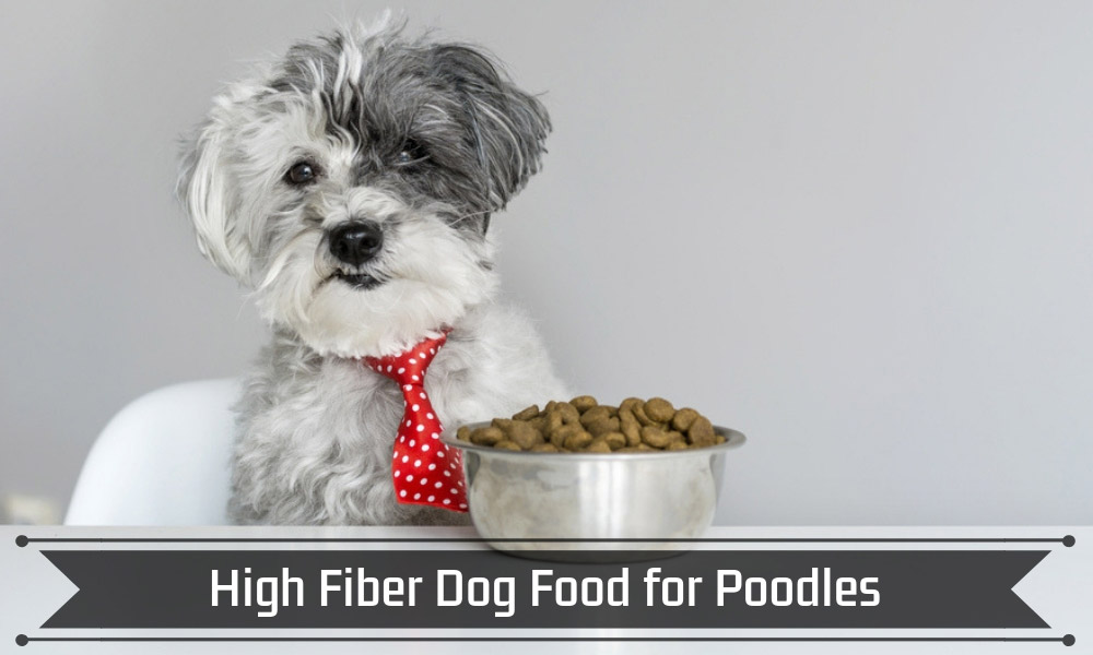 High Fiber Dog Food for Poodles