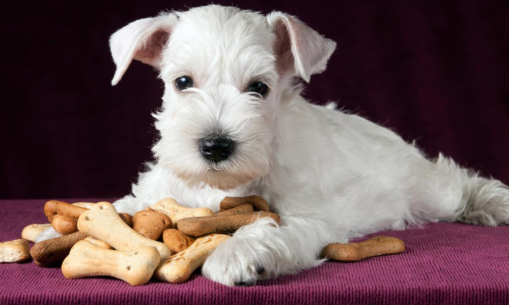 Puppy Foods for Poodles