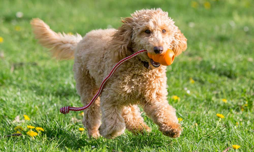 Teething Toys for Dogs