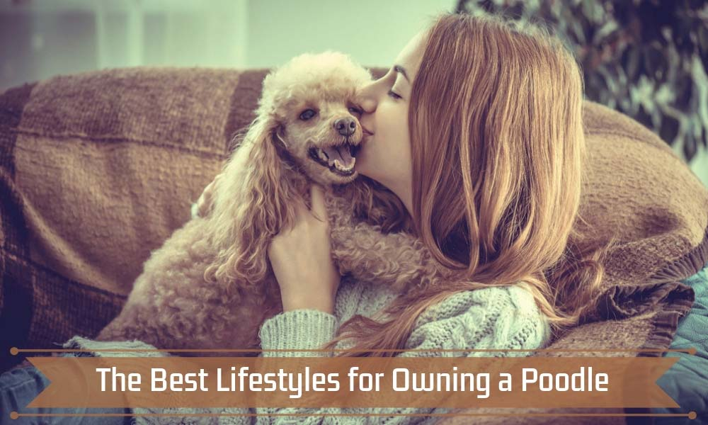 The Best Lifestyles for Owning a Poodle