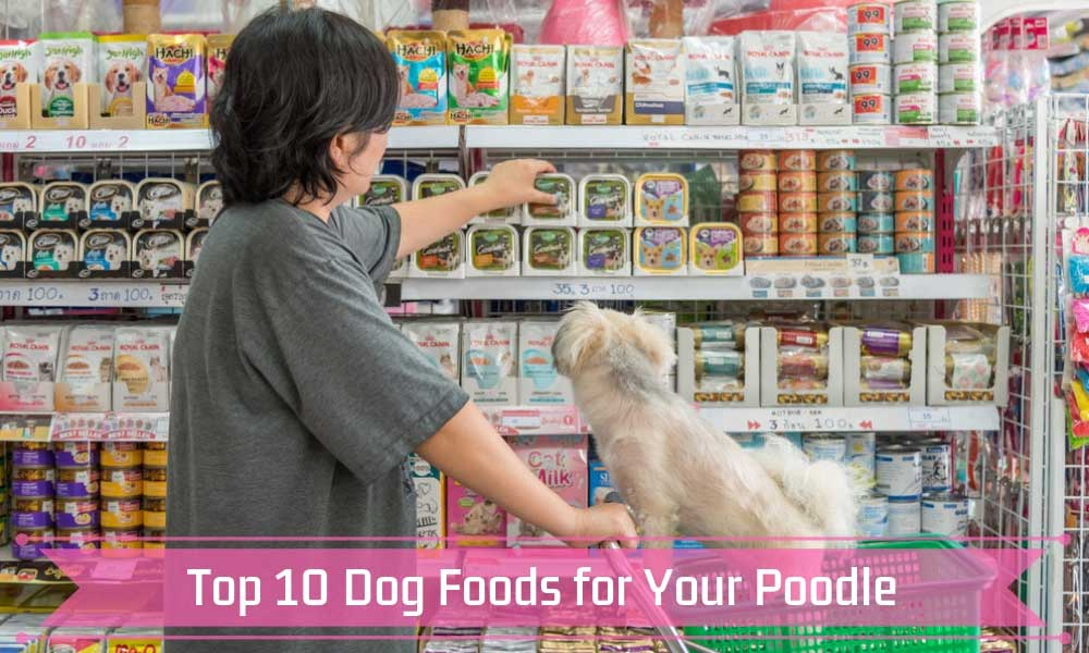 Top 10 Dog Foods for Your Poodle