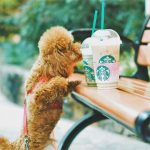 Best Canned Dog Food for Toy Poodles
