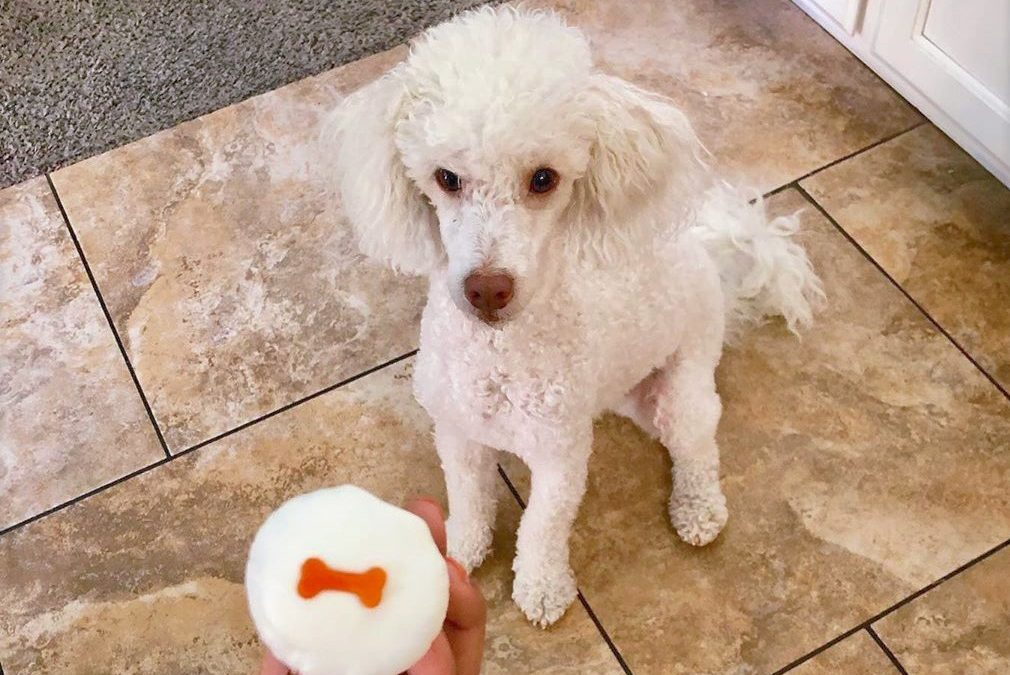 Best Nutrition for Young Toy Poodles