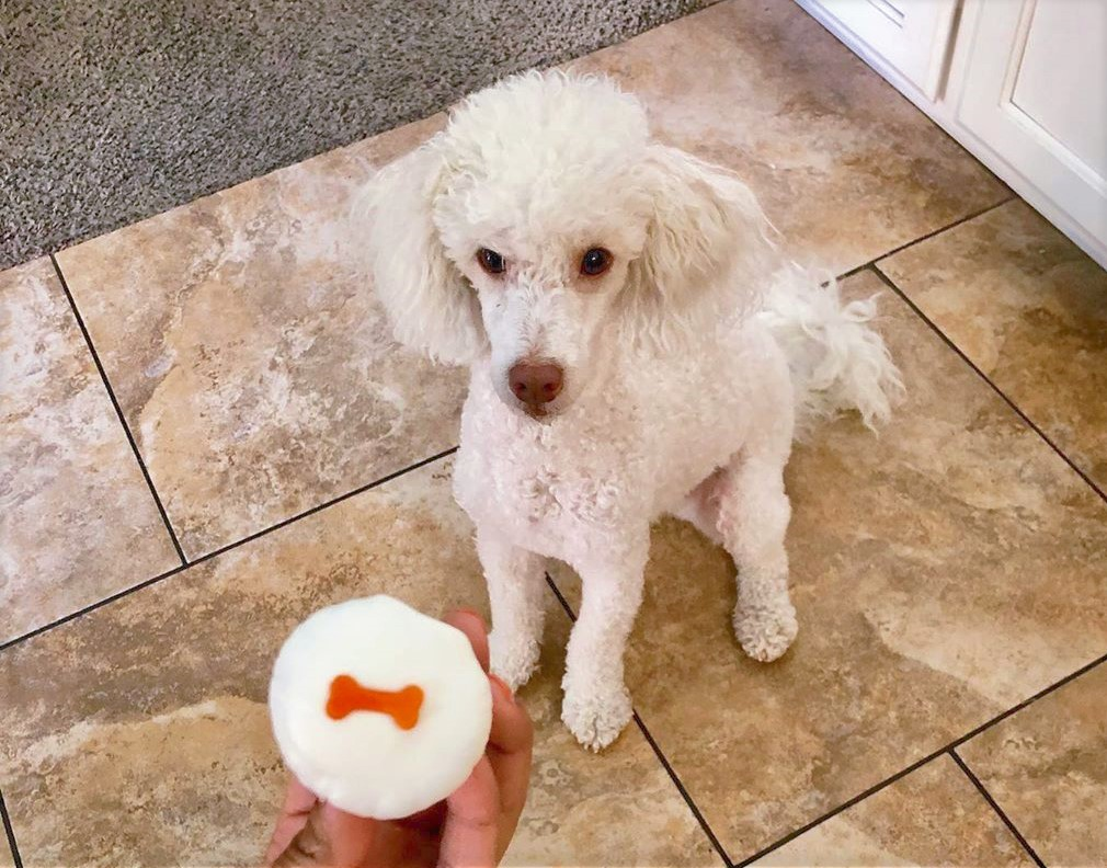 best nutrition for yourn toy poodles