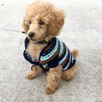 Poodle Winter Jackets